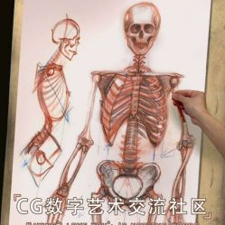 人体骨骼解剖艺术绘画教程 - The Gnomon Workshop Anatomy Workshop Volume 3